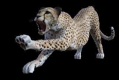 Cheetah mit Schatten auf transparentem Hintergrund