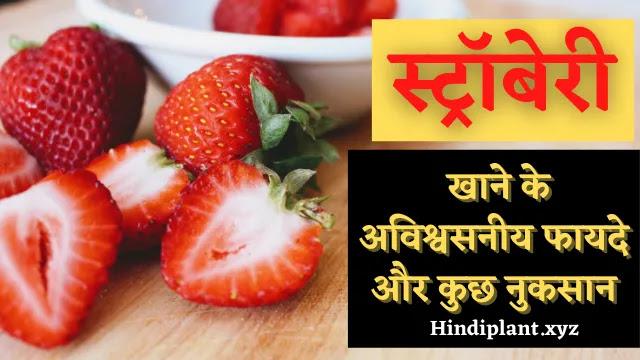 स्ट्रॉबेरी खाने के अविश्वसनीय फायदे और कुछ नुकसान