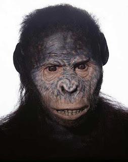 Realistica ricostruzione facciale di Lucy, l'ominide australopiteco