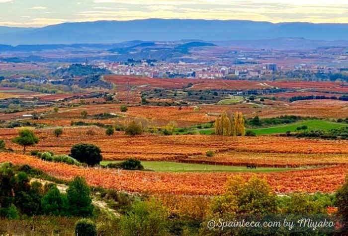 赤や黄色と紅葉したぶどう畑が広がるワイン産地リオハの風景