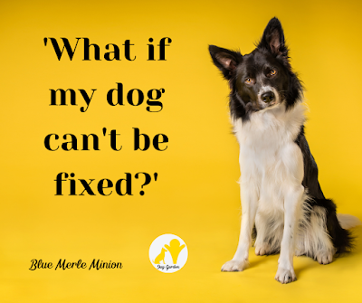 Border collie against a yellow background, head tilted to one side. Text reads 'What if my dog can't be fixed?'