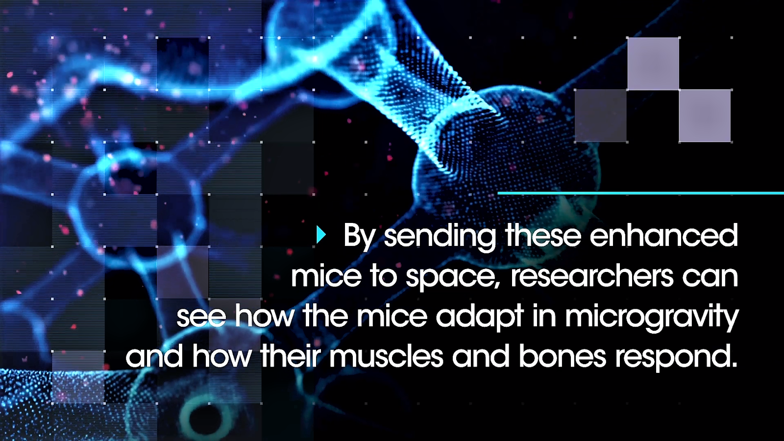 SpaceX Mighty Mice research.