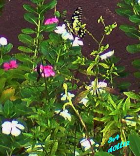 Hiding Butterfly. Kehijauan Rerumputan dan Dedaunan - Greeny Grasses