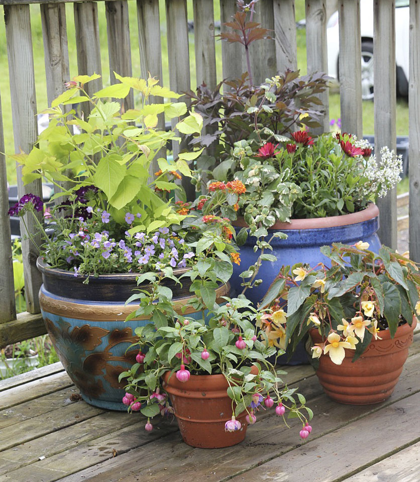 Bloomingwriter: Gardening In Nova Scotia: New Under The