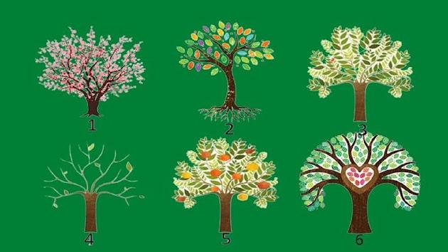 Tes Kepribadian: Pohon Mana yang Menarik Perhatian Kamu, Akan Mengungkapkan Sifat Kepribadian Dominanmu, Kamu Pilih Mana? Lihat Selengkapnya Yuk...