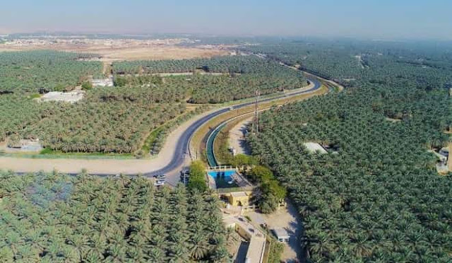 Guinness World Record for Al Ahsa Oasis as largest in the World - Saudi-Expatriates.com