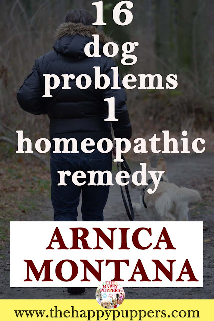 Arnica can be used to treat 16 dog health problems