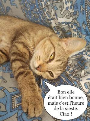 Mapuce, jeune minette du Chat Libre de Toulouse.
