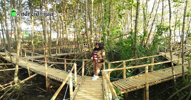 pesona hutan bakau pantai banyutowo pati jawa tengah
