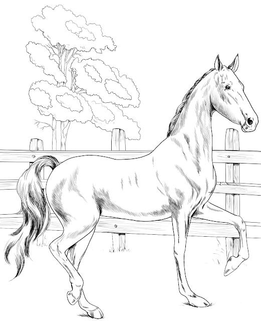 Gambar Mewarnai Kuda Untuk Anak