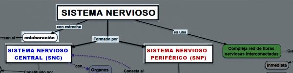 ejemplo uno de como hacer un mapa conceptual del sistema nervioso