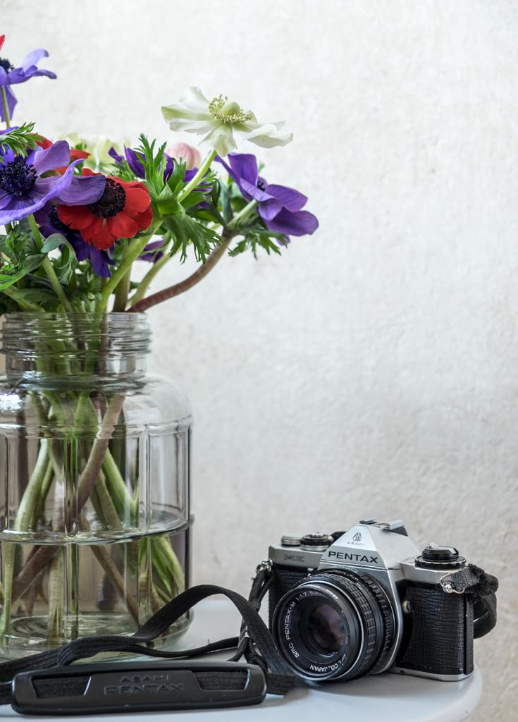fim.works | Lifestyle Blog | ein bunter Strauß Anemonen, eine graue Glasvase, rau verputzte Wand