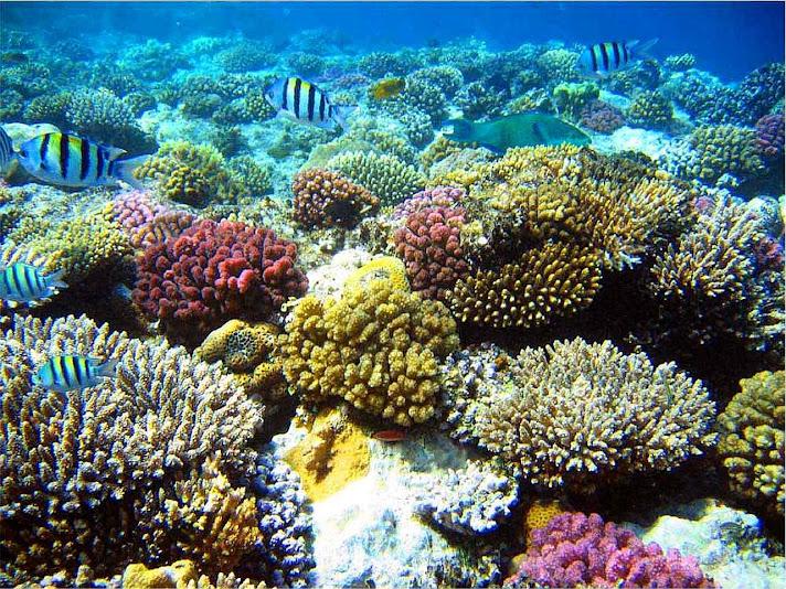 A grande barreira de corais australiana. Corais e moluscos não desaparecem e se multiplicam. Mas o homem comum não pode verificar as fakes verde
