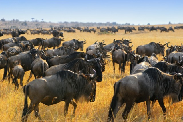 هجرة الحيوانات