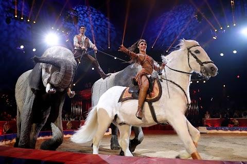 Cirkuszi társulatok magas minőségét elismerő európai tanúsítványt kapott a Magyar Nemzeti Cirkusz