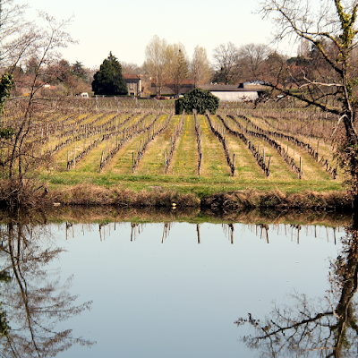 Vineyard on the Lot river.