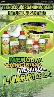 http://agenpupuknasa1.blogspot.com/2017/05/agen-resmi-pupuk-nasa-pekanbaru.html