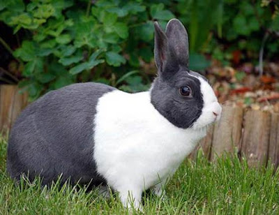 Rabbit - Animals Starting With R
