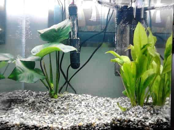 Fish tank heaters how they work