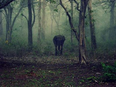 Best National Park in India, Periyar National Park, Kerala