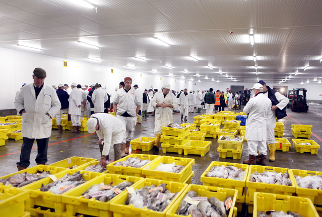 Herring and class struggle november 2016 for Fish market iceland