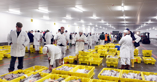 Iceland's fishing strike casts a wide net