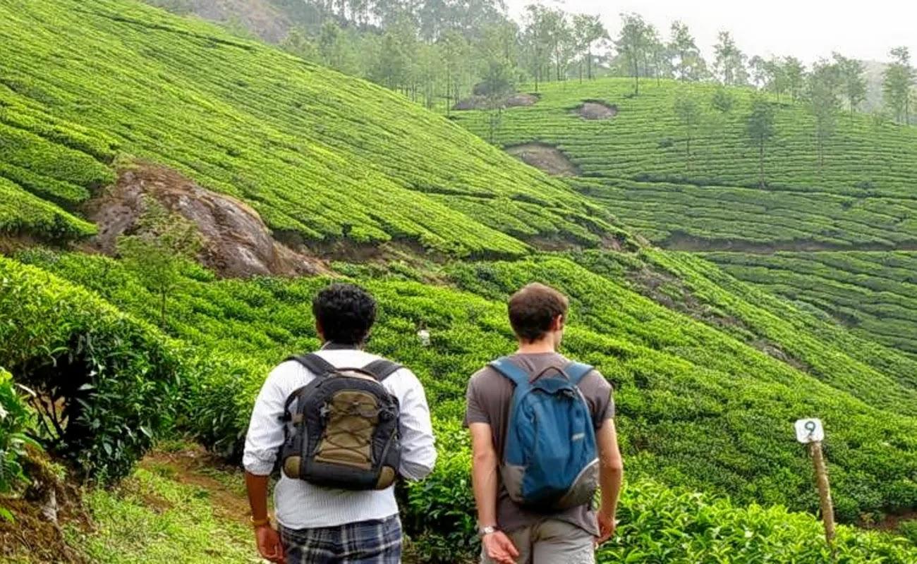Посещение чайных плантаций в Индии. Штат Керала