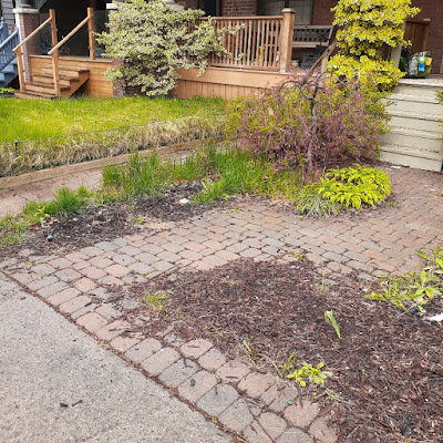 Riverdale Front Garden Spring Cleanup Before by Paul Jung Gardening Services--a Toronto Organic Gardener