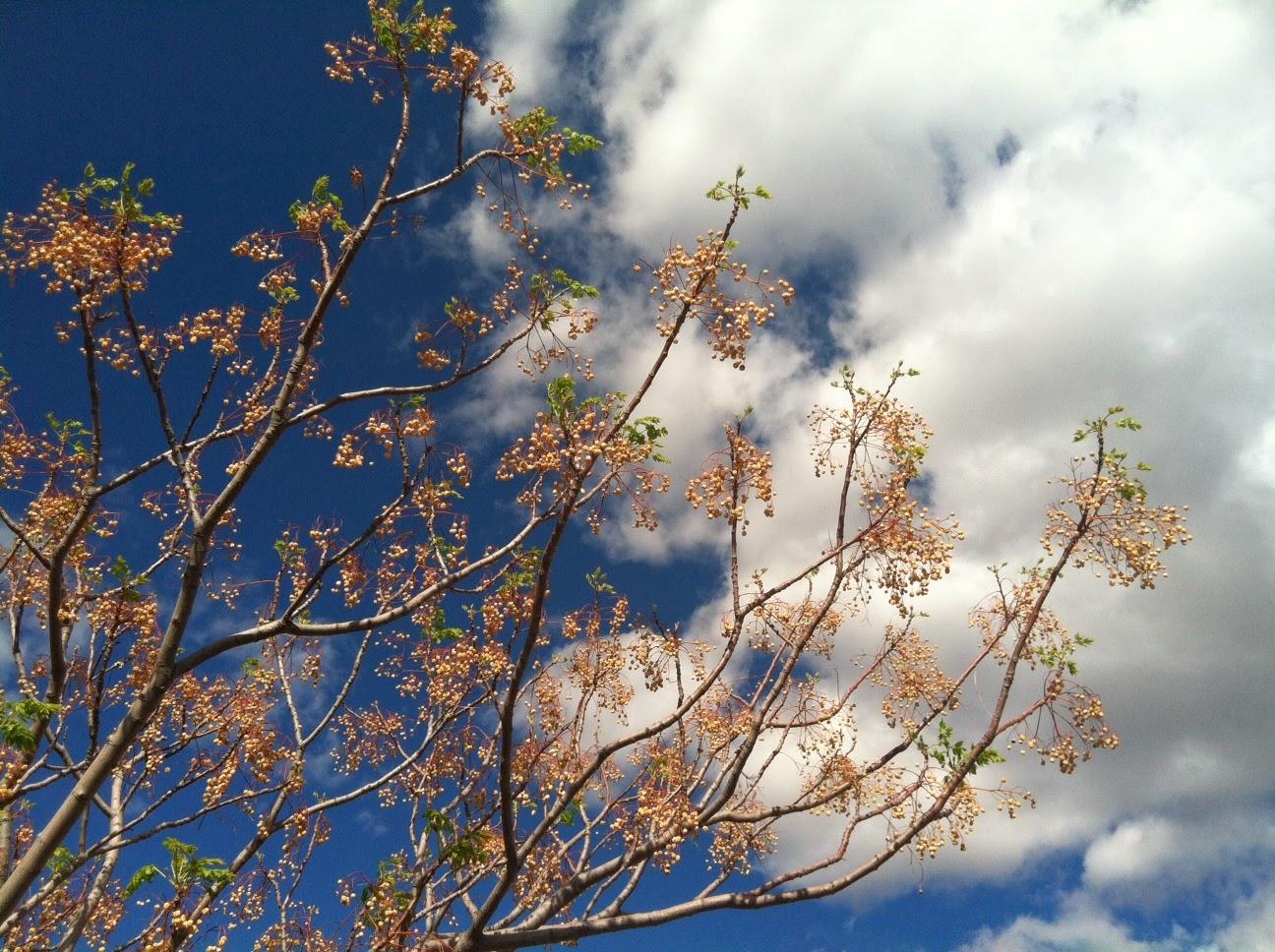 Sky Greeting by Maja Trochimczyk