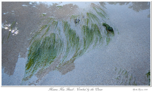 Mauna Kea Beach: Combed by the Ocean