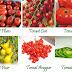 Mengenal Jenis-Jenis Tomat Yang Sering Di Konsumsi Masyarakat.