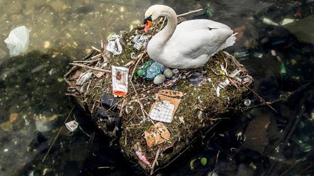 Basura problema contaminación planeta