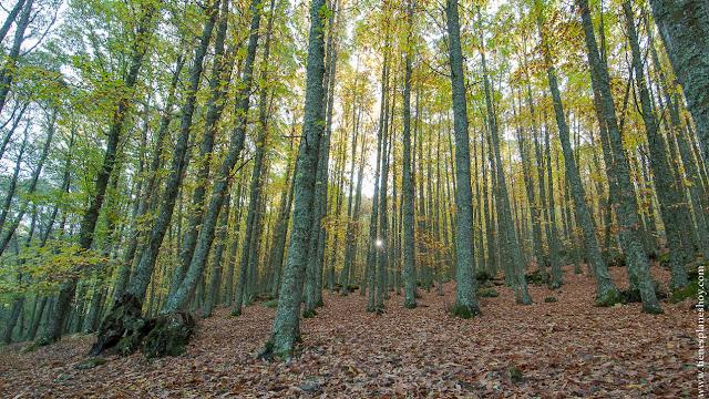 Castañar de El Tiemblo otoño