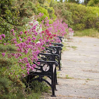 Dublin Pictures: Sorrento Park near Dalkey