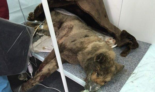 Главе предприятия мешали собаки. Наутро они лежали в мусорном баке, только один пес был жив
