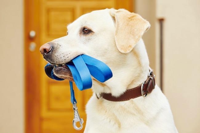 Obroże i smycze odblaskowe dla psów