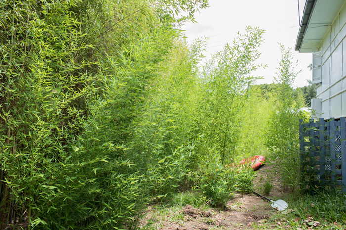 battling bamboo
