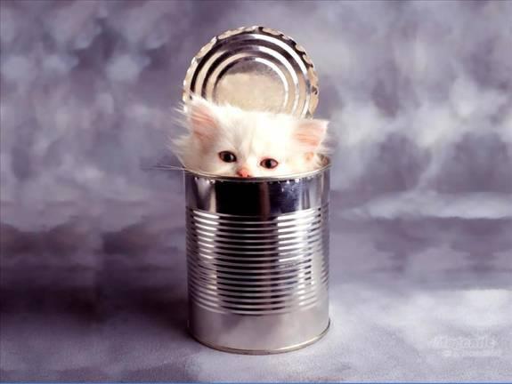 anak kucing dalam tin
