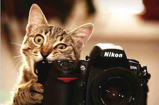 Photographer cat has dinner