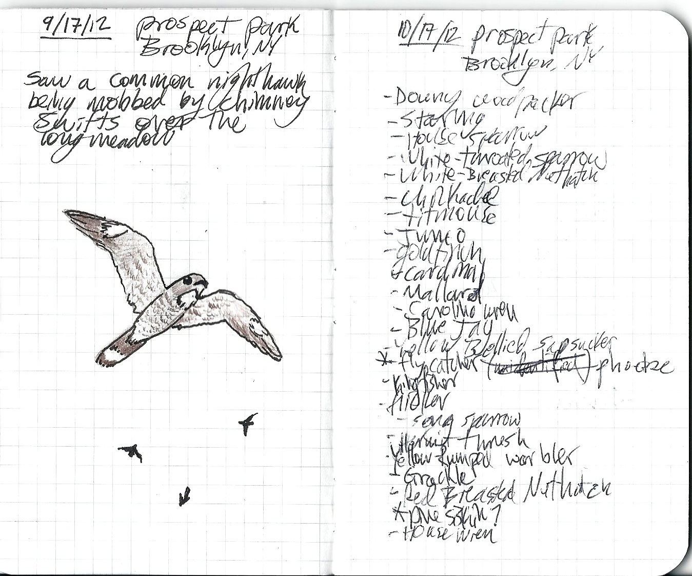 FORAGER THEORY: Birding Notes