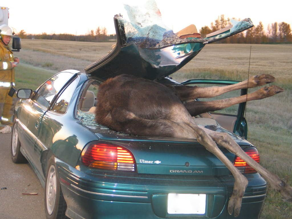 [Image: crazy-car-accidents+6.jpg]