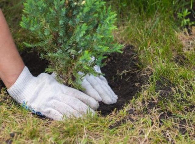 ΔΟΠΠΑΤ: Δράση δενδροφύτευσης στο Ναύπλιο στα πλαίσια της Παγκόσμια ημέρα Περιβάλλοντος