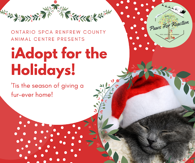 iAdopt For the Holidays: 'Tis the season to find a forever home