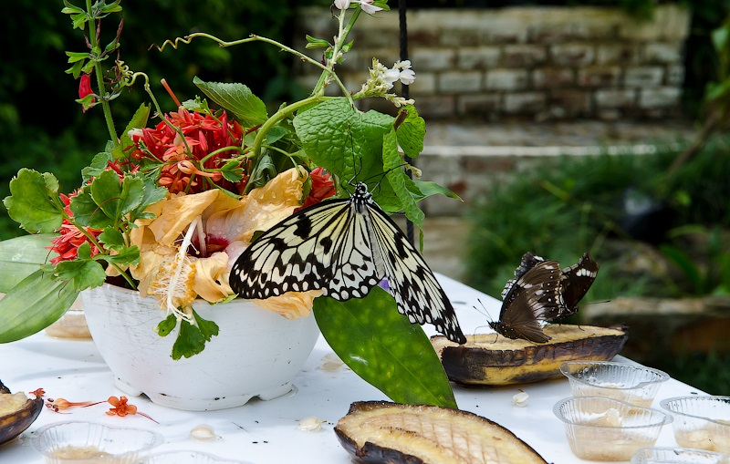 Kết quả hình ảnh cho vườn bướm thái lan