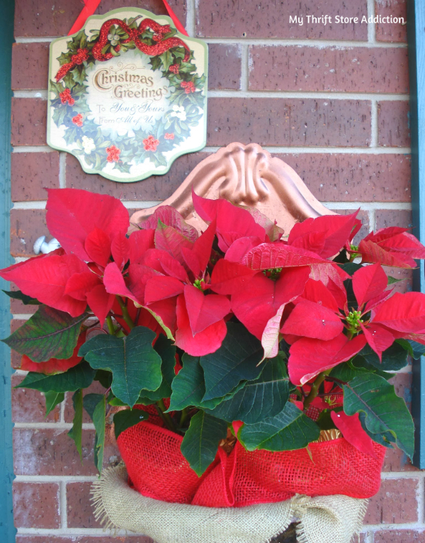 Repurposed fountain planter and poinsettias