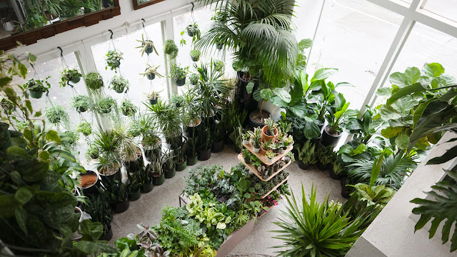 Overhead view of the inside of Plant Shop Seattle