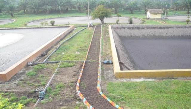 Pengelolaan limbah kelapa sawit menjadi biodiesel, pupuk cair, kompos, solid, dan energi listrik