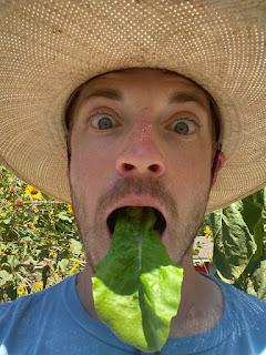 Lettuce Tongue