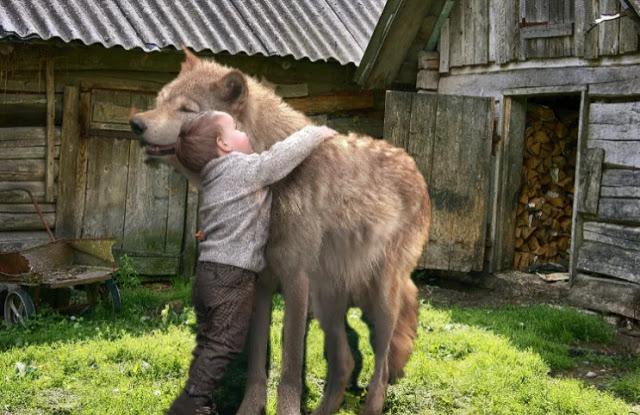 Как волк по кличке Серый, спас маленького Колю