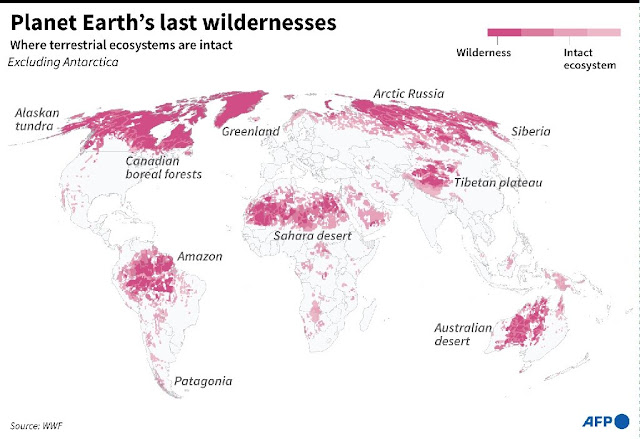 World wildlife plummets more than two-thirds in 50 years: index